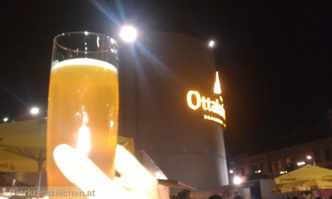 Foto eines Bieres der Marke Jakobsgold aus der Brauerei Brauerei Gusswerk
