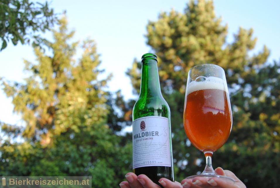 Foto eines Bieres der Marke Kiesbye's Waldbier 2013: Lärche  aus der Brauerei Kiesbye
