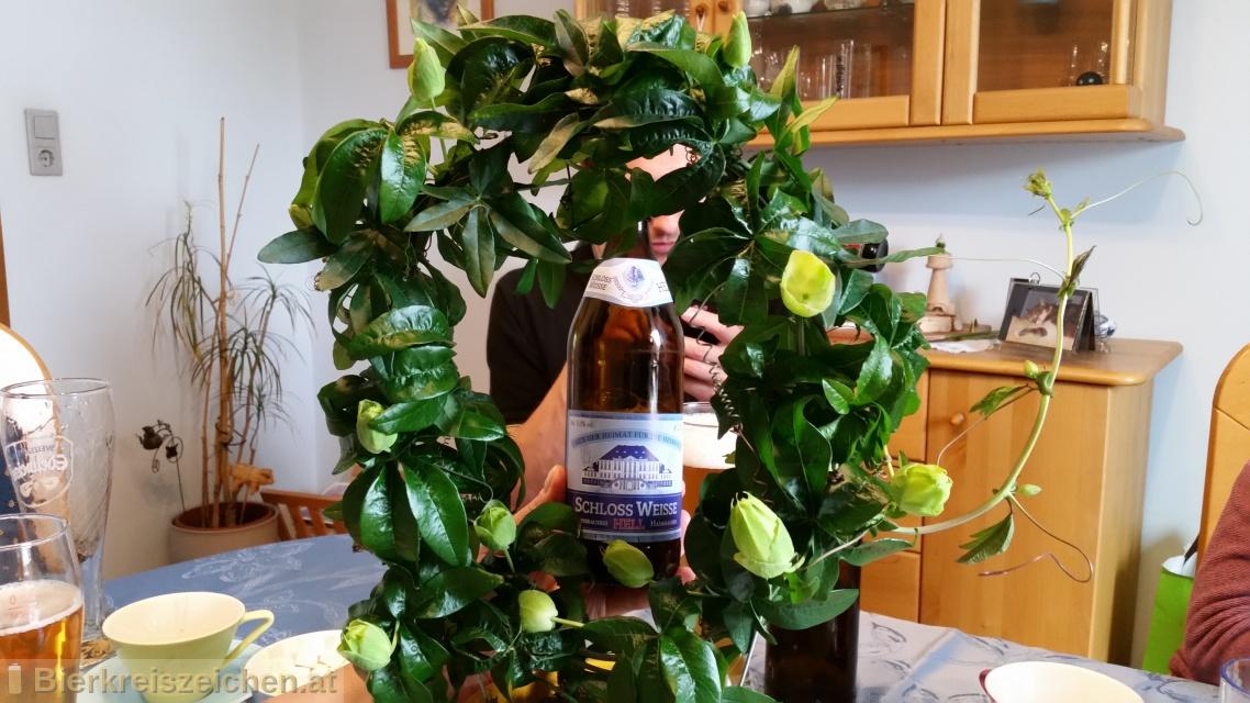 Foto eines Bieres der Marke Schloß-Weisse aus der Brauerei Schloßbrauerei Haimhausen