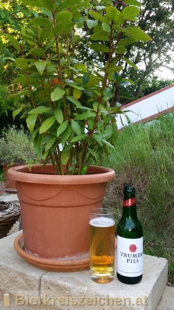 Foto eines Bieres der Marke Trumer Pils aus der Brauerei Trumer Privatbrauerei