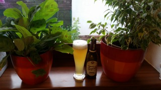 Zwettler Young Symphony - Witbier