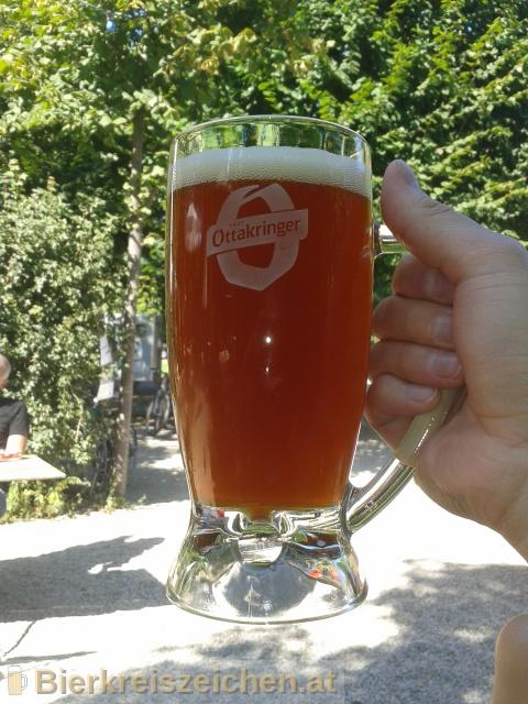 Foto eines Bieres der Marke Ottakringer - Gold Fassl - Rotes Zwickl aus der Brauerei Ottakringer Brauerei