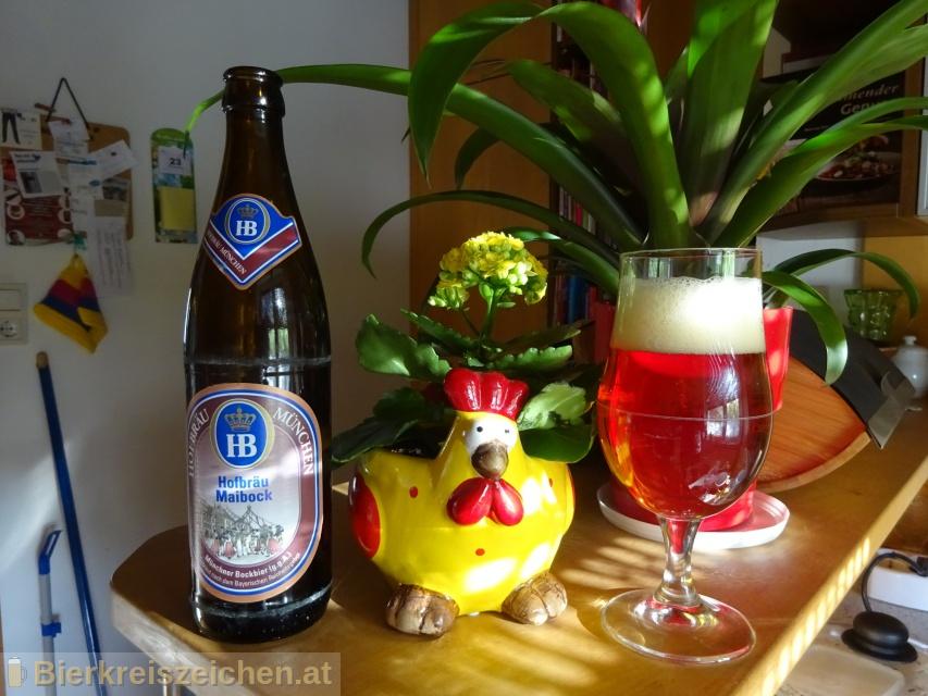 Foto eines Bieres der Marke Hofbräu Maibock aus der Brauerei Staatliches Hofbräuhaus